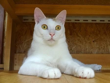 ニモ「えっ!そうだったの!?」