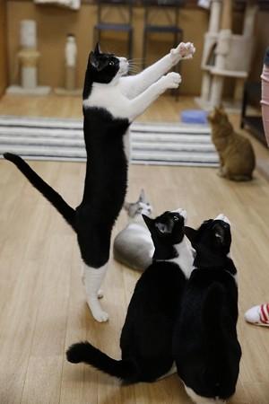 ダース「オモチャ、ぼくにちょーだい!」