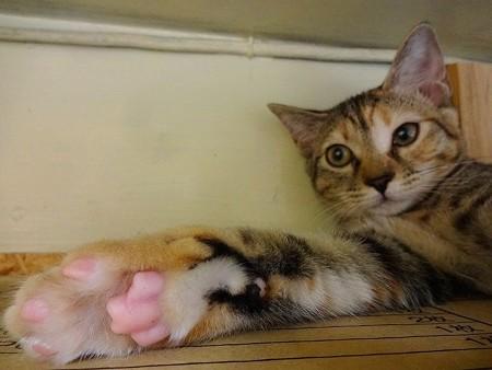 ナナ「右のお手手だけピンクの肉球なの♪あとは黒よ♪」