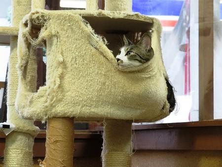 サブレ「ここ、寝心地がいいんだ」