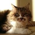 写真: ポム「やっぱり猫と言ったら日向ぼっこだよな」