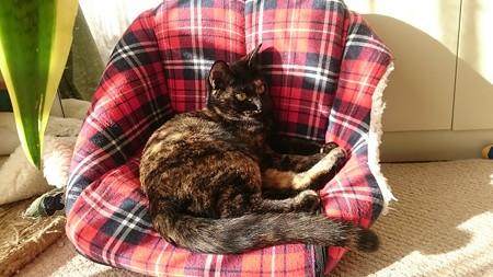 サヤ「お正月はこのソファで寝正月よ」