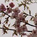 Photos: 2015/03/15・・・春の足音No02