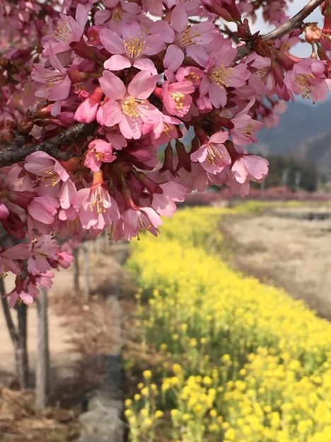 Photos: 2015/03/15・・・春の足音No05