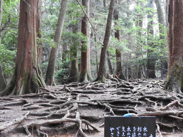 鞍馬寺20 木の根道