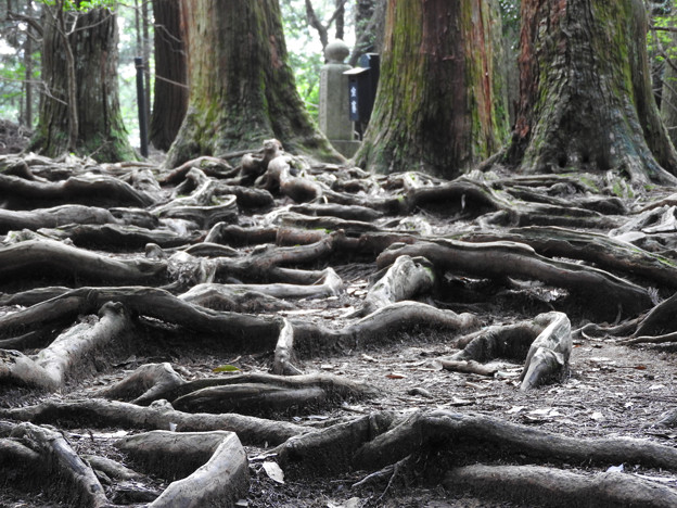 鞍馬寺22-3 木の根道