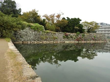 広島城14 左端が被爆マルバヤナギ