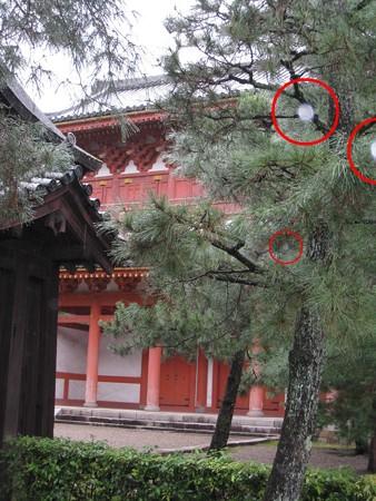 2011.09 大仙院2