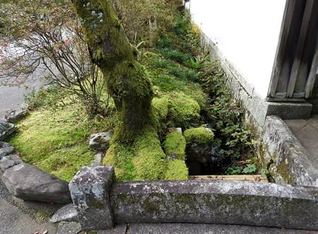 石山寺15 いい感じの苔