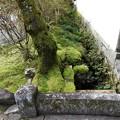 写真: 石山寺15 いい感じの苔