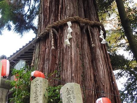 石山寺31 神木 杉(椙)ここが心理的中心