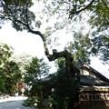 写真: 石山寺76 芭蕉庵  龍樹1