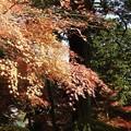写真: 石山寺97 紅葉10