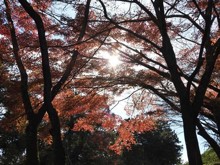 石山寺98 紅葉11