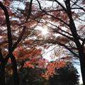 写真: 石山寺98 紅葉11