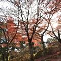 写真: 石山寺100 紅葉13