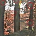 写真: 石山寺88 紅葉01(オーブ)