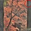 写真: 石山寺89 紅葉02(オーブ)