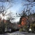 写真: 石山寺122 帰りの参道2