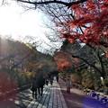 写真: 石山寺123 帰りの参道3