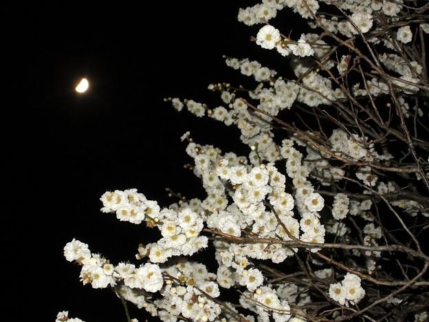 写真: 梅月夜 2