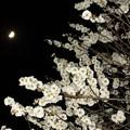 梅月夜 2