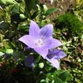 写真: 花びらのプール