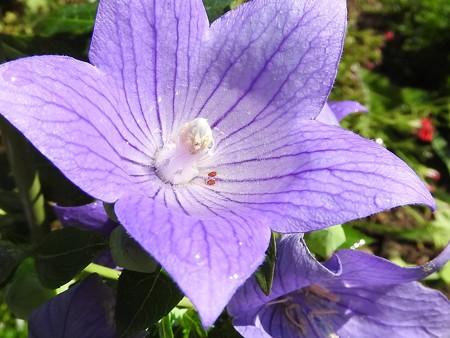 花びらのプール2