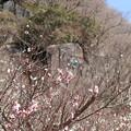 Photos: 春登山