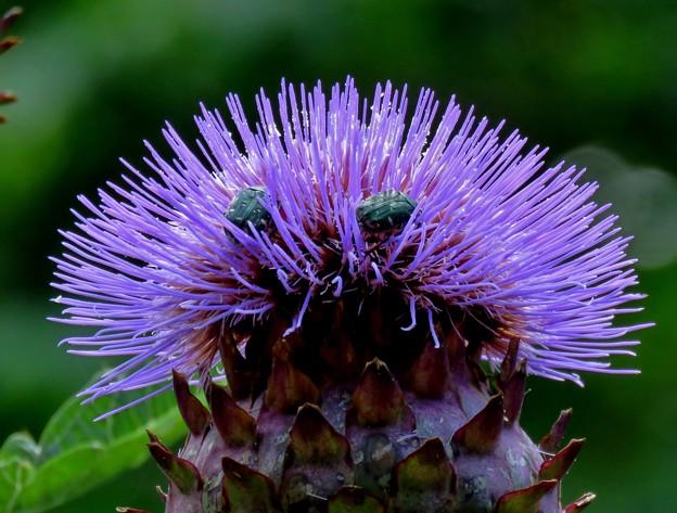 ハーブ園のお花