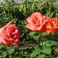 Photos: 最後の花