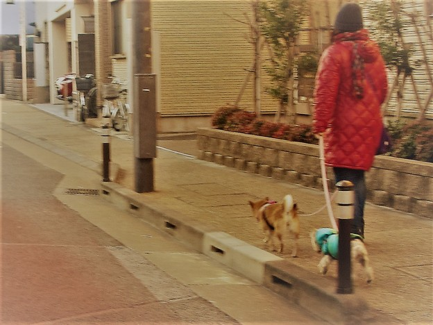Photos: 違う種類@犬170126