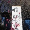 Photos: 順路@梅170126