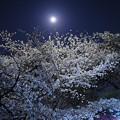木星と月と桜