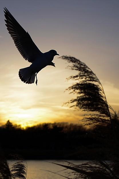 写真: 明日へ羽ばたけ!