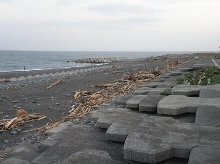 浜にも沢山の流木