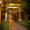 夕焼けの鳥居@桶川