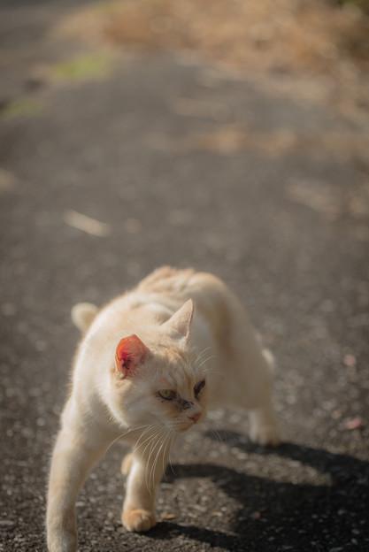 汚い猫2@八丁湖