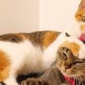 Photos: うちの猫達