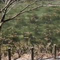pz1665rs モネの池