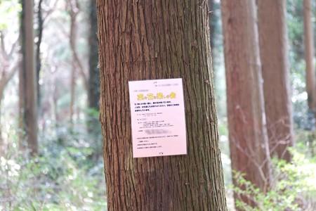 2015.03.23 追分市民の森 イベントポスター 「痛い」