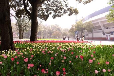 2015.04.06 横浜公園 チューリップ 携帯撮影
