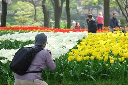 2015.04.06 横浜公園 チューリップ撮影