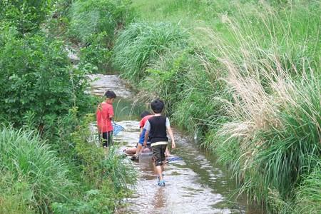 2015.05.19 和泉川 魚とり