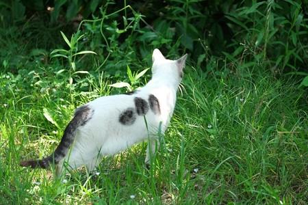 2015.05.31 和泉川 猫