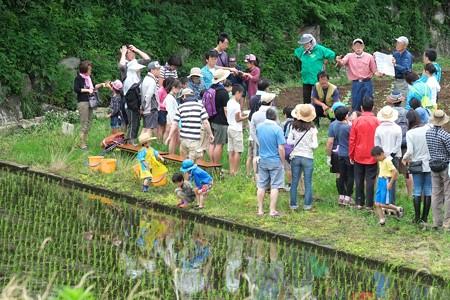 2015.06.06 追分市民の森 田植体験イベント