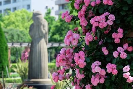 2016.05.18 山手 山下公園 バラ