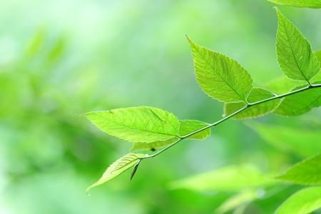 2016.08.24 追分市民の森 微涼風
