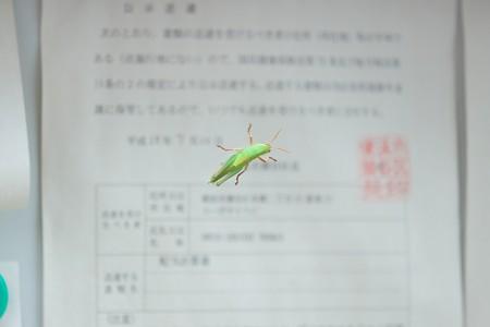 2016.09.04 和泉川 掲示板にツチイナゴ
