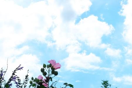 2016.09.09 追分市民の森 フヨウ 空